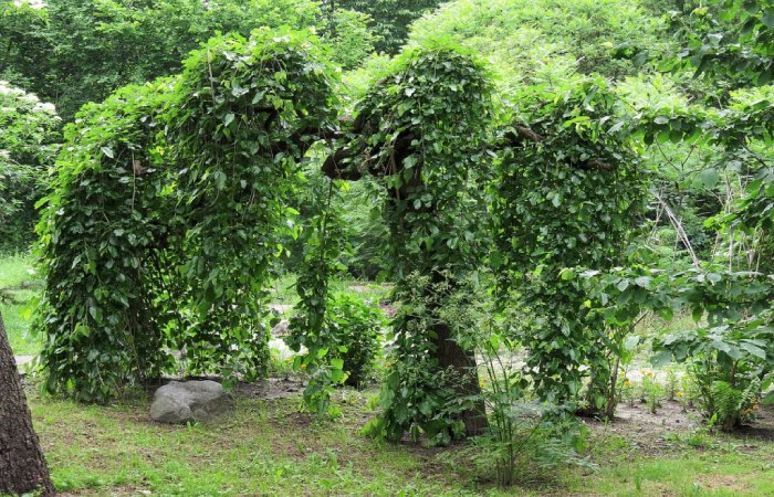 image result for uses of mulberry tree
